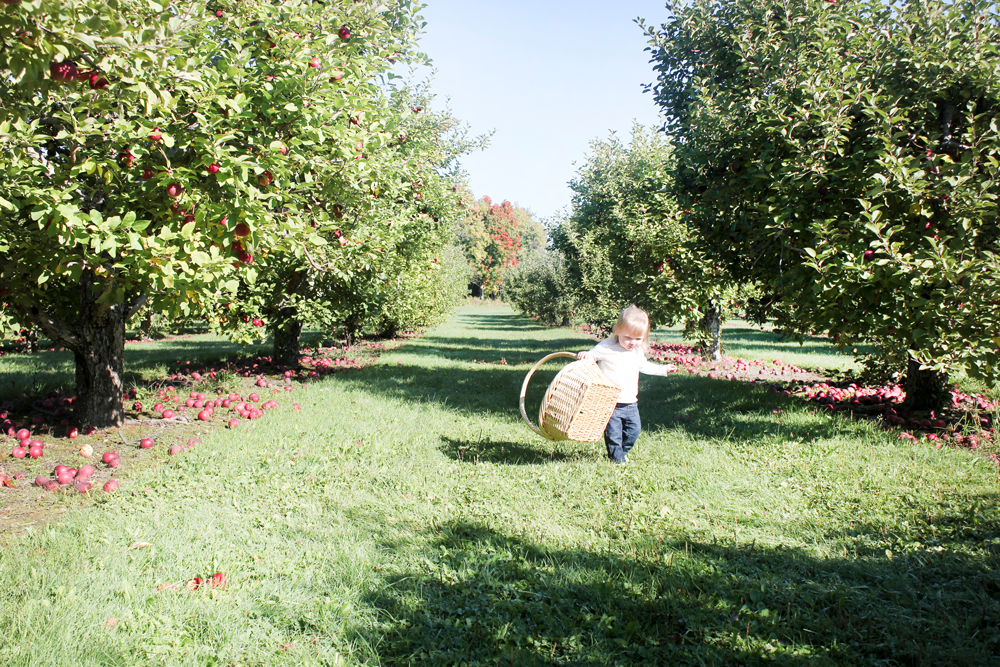 Apple Picking | 27th and Olive